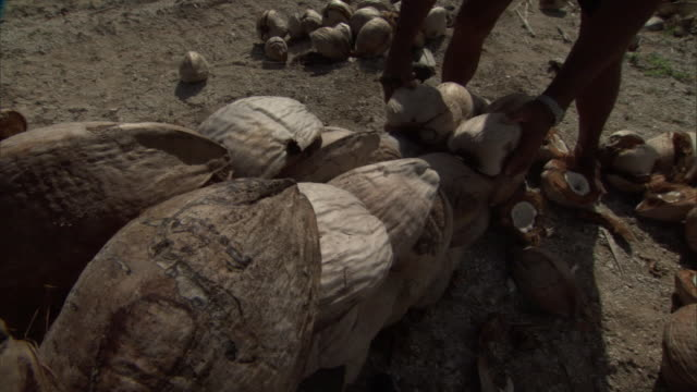 man sorts and stacks coconuts, french polynesia - ココナッツ点の映像素材/bロール