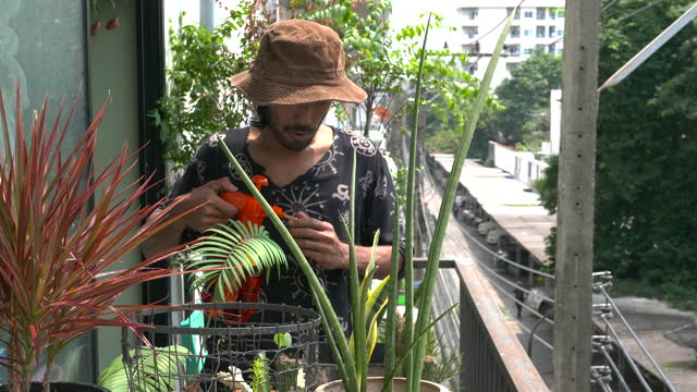 man spraying houseplants and cutting dry leaves - one mid adult man only stock videos & royalty-free footage