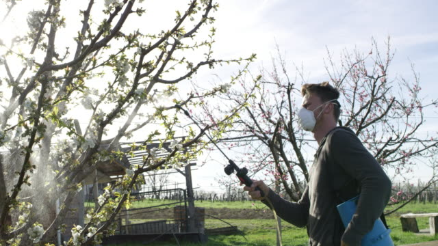 man spraying pesticides over a fruit tree - irrigation equipment stock videos and b-roll footage