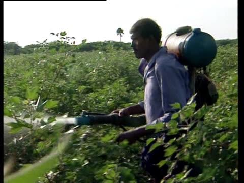 A man sprays cotton plants with pesticide