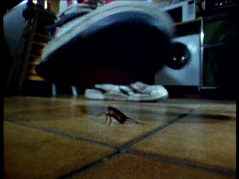 vídeos de stock e filmes b-roll de man stamps on cockroach on kitchen floor and kicks camera, usa - passos