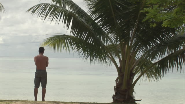 ws, man standing at palm tree, facing ocean, rear view, moorea island, tahiti, french polynesia - tahiti stock videos and b-roll footage
