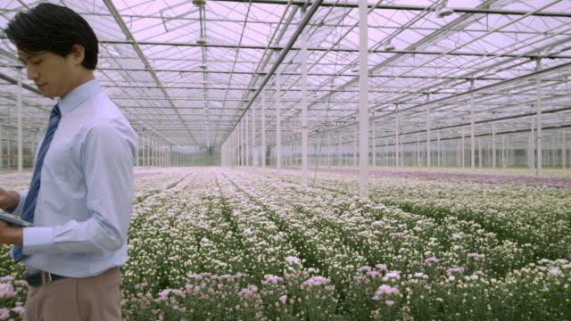 vidéos et rushes de man standing in greenhouse  - un seul homme d'âge moyen