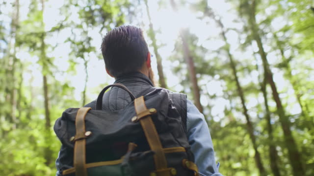 man standing in the middle of a forest looking up - nature stock videos & royalty-free footage