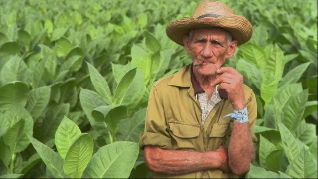 ms pan man standing in tobacco field / san luis, pinar del rio, cuba - cuban culture stock videos & royalty-free footage