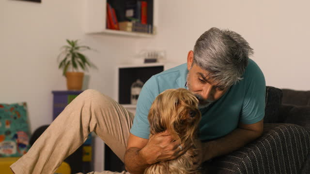 stockvideo's en b-roll-footage met man stroking his pet dog at home - alleen één mid volwassen man