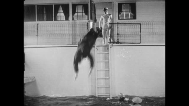1928 a man (buster keaton) surrenders once caught sneaking onto a steamboat - 1928 stock videos & royalty-free footage