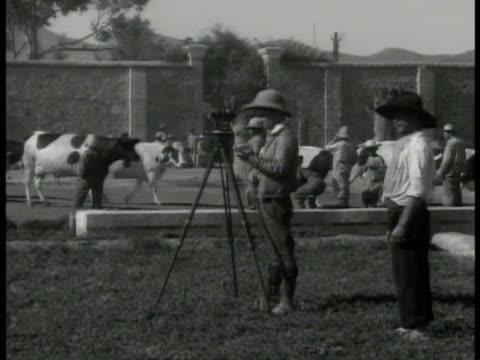 vídeos y material grabado en eventos de stock de man surveying land w/ tripod equipment, cattle bg. vs surveyor using equipment on field. farmlands on hill. - 1935