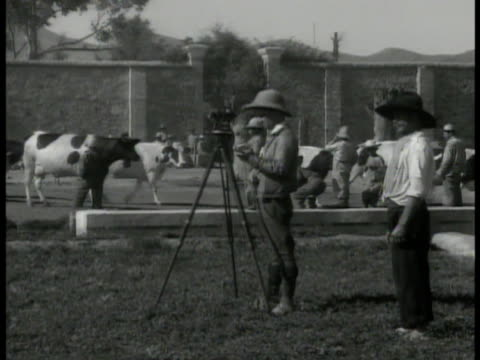 vídeos de stock, filmes e b-roll de man surveying land w/ tripod equipment, cattle bg. vs surveyor using equipment on field. farmlands on hill. - 1935