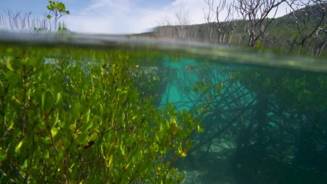 a man swimming near mangroves - tauchgerät stock-videos und b-roll-filmmaterial