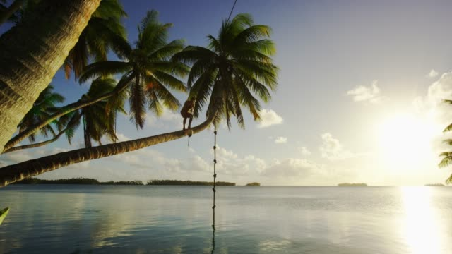a man swings from a palm tree at palmyra atoll, part of pacific remote islands marine national monument. - micronesia stock videos & royalty-free footage