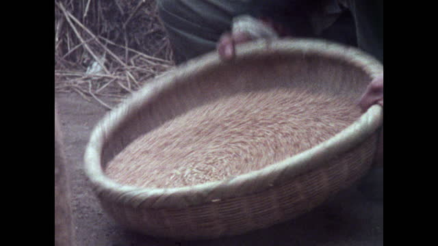 ms man swirls rice grains in bamboo sieve in china; 1973 - bamboo plant stock videos & royalty-free footage