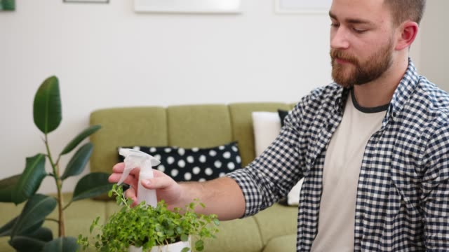 man taking care of his houseplants, spraying them with water - aerosol spray stock videos & royalty-free footage