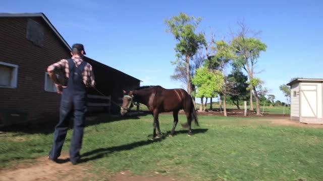 stockvideo's en b-roll-footage met ms pov ts man taking care of horse / manitoba community, close to santa cruz de la sierra, bolivia - alleen één mid volwassen man