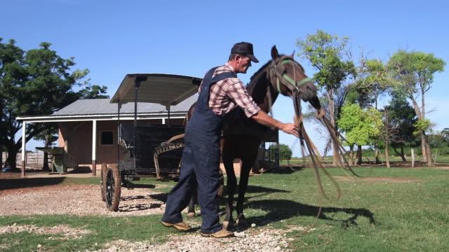 ms man taking care of horse / manitoba community, close to santa cruz de la sierra, bolivia - amische stock-videos und b-roll-filmmaterial