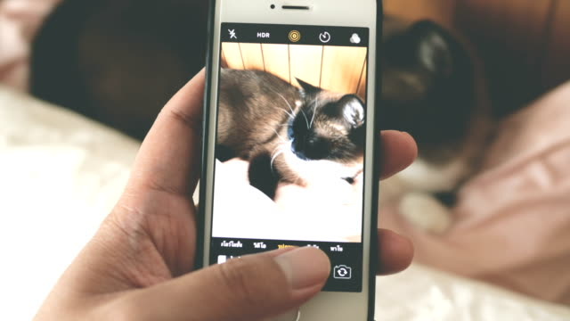 pov : man taking picture of cat - photographing stock videos & royalty-free footage