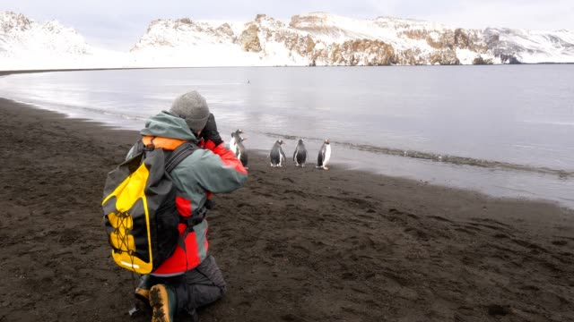 man taking pictures to the penguins in deception island - antarctica people stock videos & royalty-free footage
