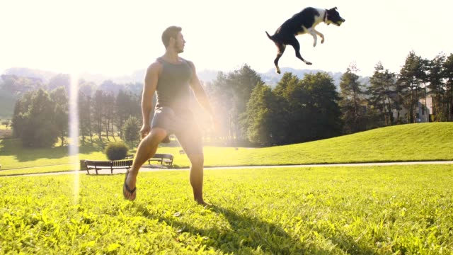 slo mo man teaching border collie to catch a ball - retrieving stock videos & royalty-free footage