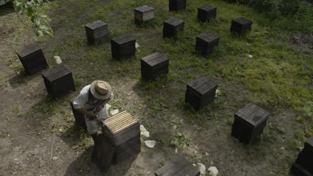 vídeos de stock e filmes b-roll de man tends to beehives, japan. - grupo mediano de animales