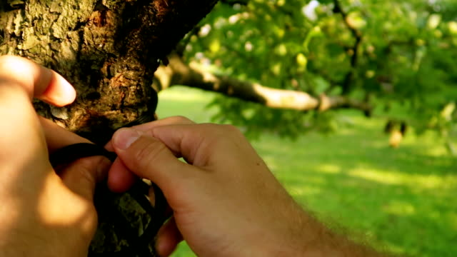 man tie a rope and a knot on a tree in slow motion - bending stock videos & royalty-free footage