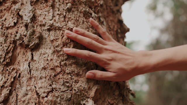 a man touching aged tree, trunk - tree hugging stock videos & royalty-free footage