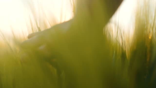 Man Touching Crops 4K