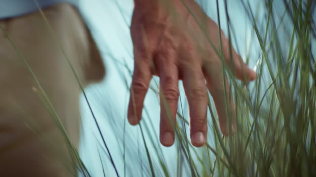 man touching reed with his hand - reed grass family stock videos and b-roll footage