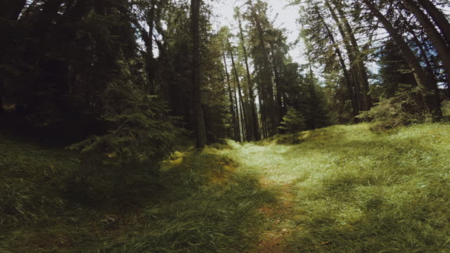 pov man trail running in the forest - footpath video stock e b–roll