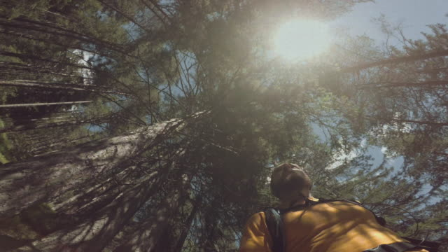 vídeos de stock e filmes b-roll de pov man trail running in the forest - câmara vestível