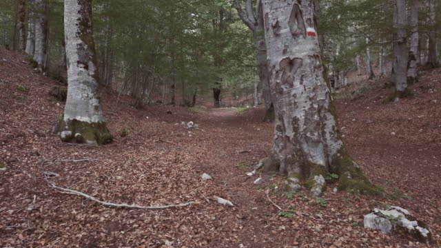 Man trail running in the forest