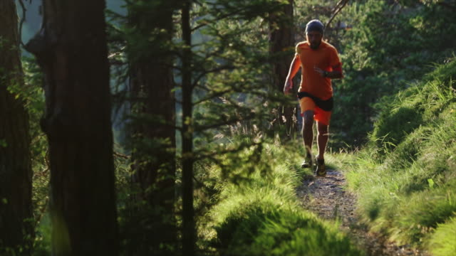 man trail running in the forest - named wilderness area stock videos & royalty-free footage