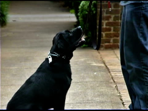man training pet dog - one mid adult man only stock videos & royalty-free footage