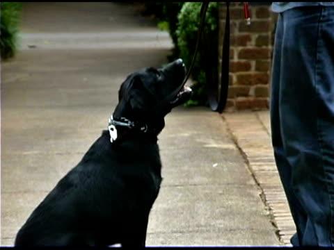 vidéos et rushes de man training pet dog - un seul homme d'âge moyen