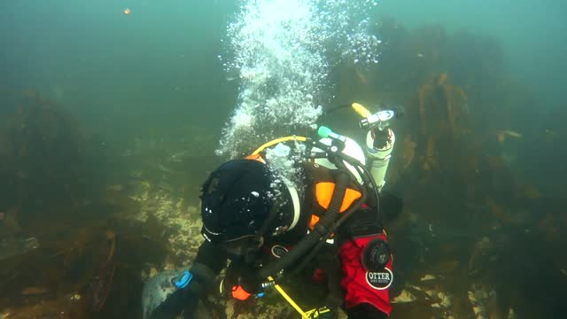man treated a wild grey seal to a thorough scratching while diving in the waters off the english farne islands on october 8. in this footage shot by... - directly below stock videos & royalty-free footage