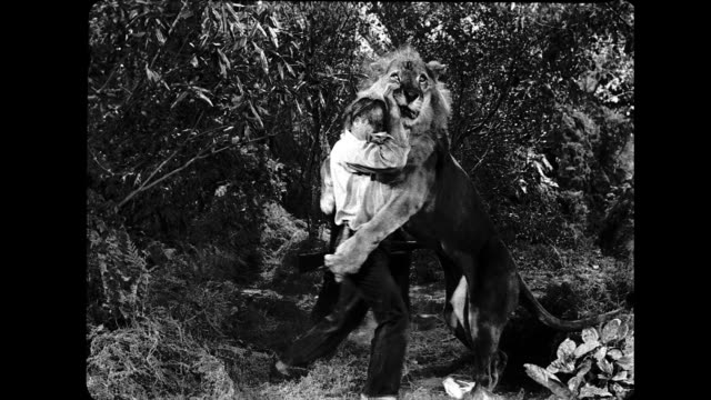 man tries to rescue downed man but is attacked by lion / wrestles with lion, man and lion fall to ground. man wrestles lion on january 01, 1950 - löwe großkatze stock-videos und b-roll-filmmaterial