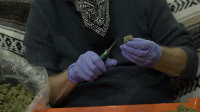 man trimming chunks of marijuana with secateurs. - mittlerer teil stock-videos und b-roll-filmmaterial