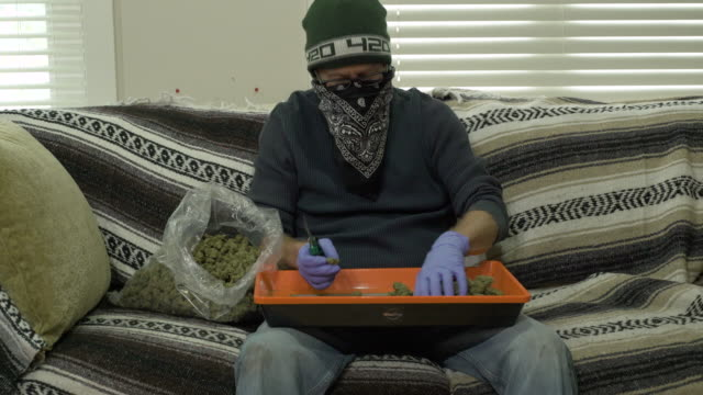 man trimming chunks of marijuana with secateurs. - secateurs stock videos & royalty-free footage