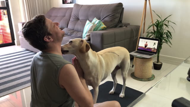 man trying to do yoga at home with his dog in the way - cross legged stock videos & royalty-free footage