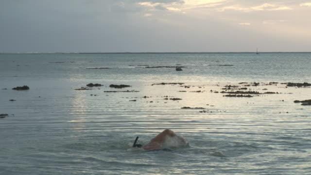 vídeos de stock e filmes b-roll de ms, man trying to swim in shallow water, tahiti, french polynesia - territórios ultramarinos franceses