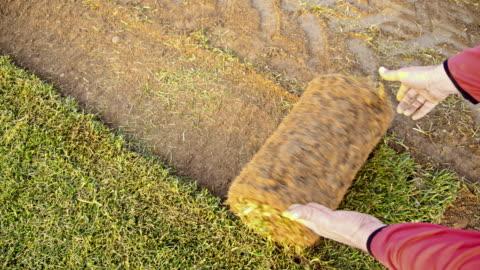 vídeos y material grabado en eventos de stock de slo mo hombre desenrollar el césped en un campo - hierba familia de la hierba