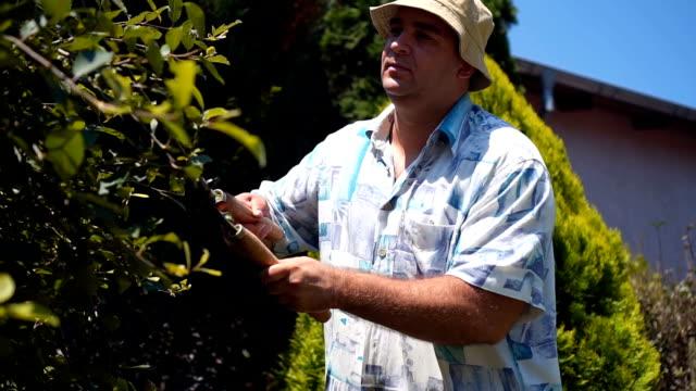 man used scissors to pruning wood - pruning stock videos & royalty-free footage