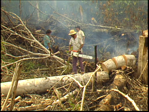 a man uses a chainsaw to cut up a felled tree in the amazon rainforest camera zooms out to a wide shot - roraima state stock videos and b-roll footage