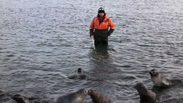 man uses a go pro camera to video antarctic fur seal pups underwater at salisbury plain, south georgia, southern ocean. - 飼い慣らされた点の映像素材/bロール