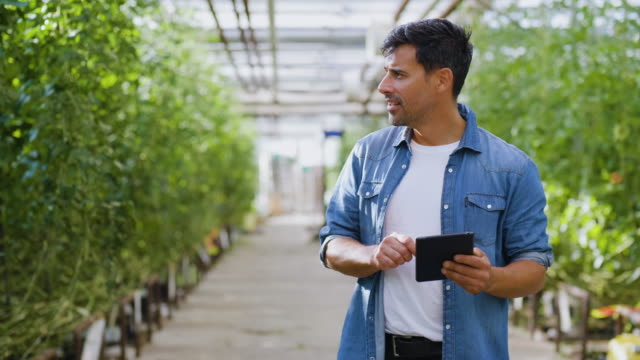 man using a tablet in his greenhouse - all shirts stock videos & royalty-free footage
