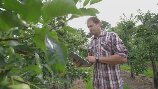 stockvideo's en b-roll-footage met man using digital digital tablet in apple farm - alleen één oudere man