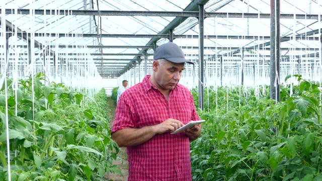4K Man using digital tablet in greenhouse