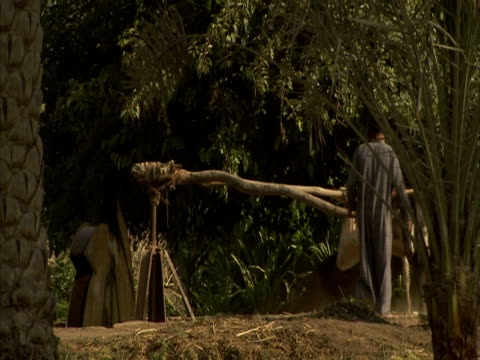 man using donkey to drive water wheel, egypt (sound available) - アジア野ロバ点の映像素材/bロール