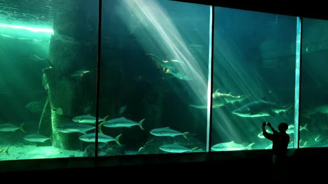 stockvideo's en b-roll-footage met man using smart phone to film fish in predator exhibit - kleine groep dieren