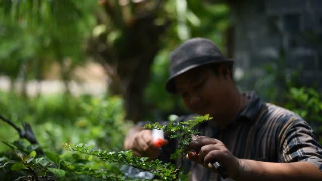 vídeos y material grabado en eventos de stock de un hombre con pulverizador de agua y comprobar un árbol bonsai. - pinaceae