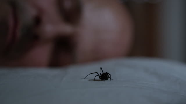 man wakes up to black widow on his pillow - arachnophobia stock videos and b-roll footage